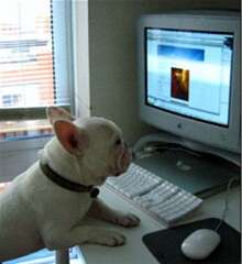Frenchie at computer